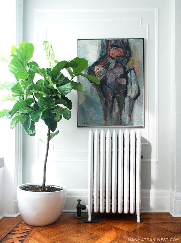 The Fiddle Leaf Fig Tree - Lauren Nelson on indoor wheat plant, indoor creeping fig, indoor tobacco plant, indoor oak plant, indoor willow plant, indoor pistachio plant, indoor avacado plant, indoor thyme plant, indoor holly plant, indoor berry plant, indoor cedar plant, indoor rosemary plant, indoor watermelon plant, indoor sage plant, indoor citrus plant, indoor pumpkin plant, indoor lilac plant, indoor garlic plant, indoor cocoa plant, indoor papaya plant,