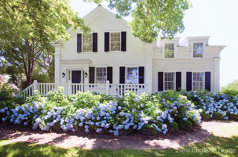 Purple-Hydrangeas-Big-White-House